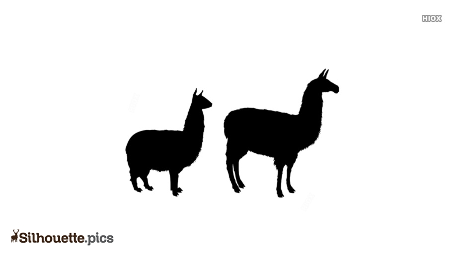 Alpaca Cartoon Silhouette Vector And Graphics