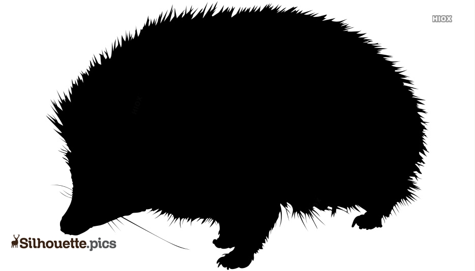 Animal Silhouette Hedgehog