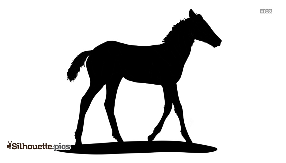Baby Animal Silhouette Images, Pics