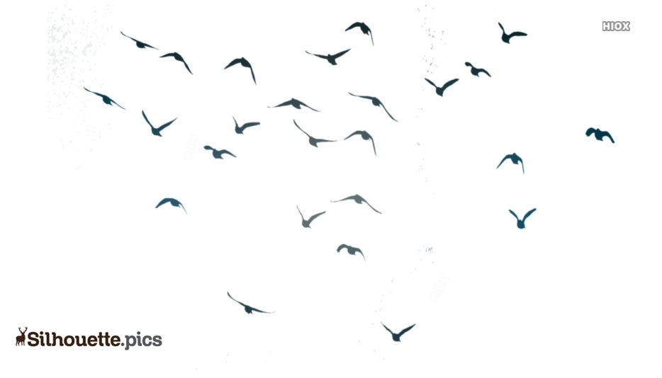 Beautiful Flying Birds Silhouette Free Vector Art