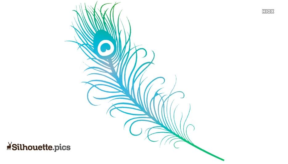 Beautiful Indian Peacock Feather Clipart