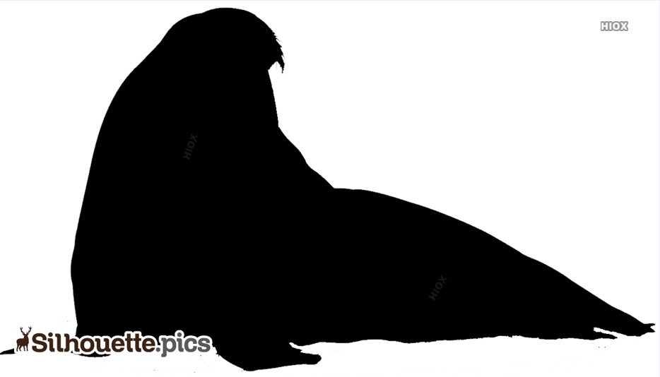 Big Sea Lion Silhouette