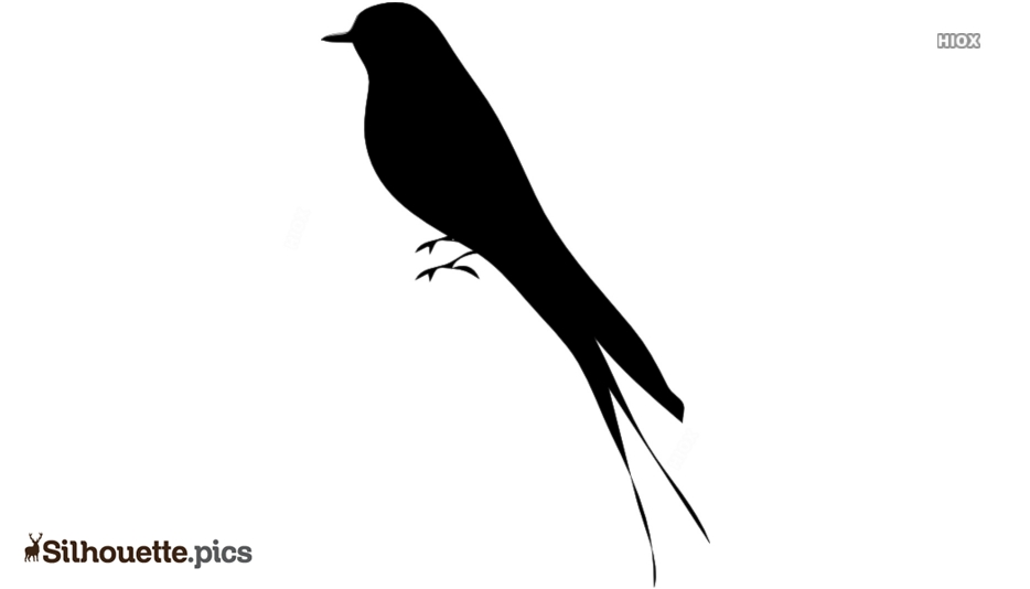 Bird Cartoon With Long Tail Silhouette Background
