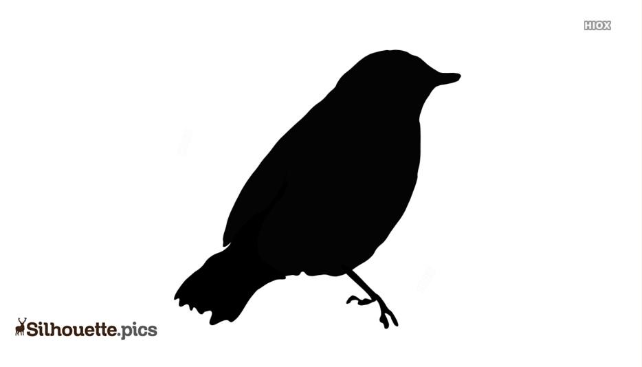 Bird Sitting Silhouette Pic