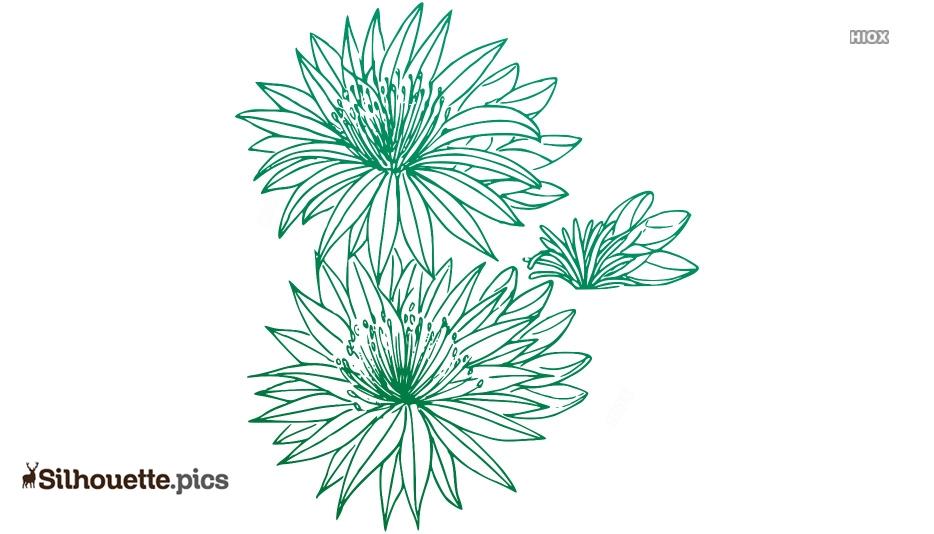 Bitterroot Flower Logo Silhouette For Download