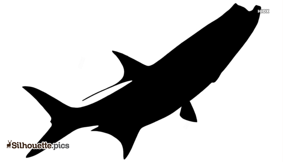 Black And White Cobia Fish Silhouette