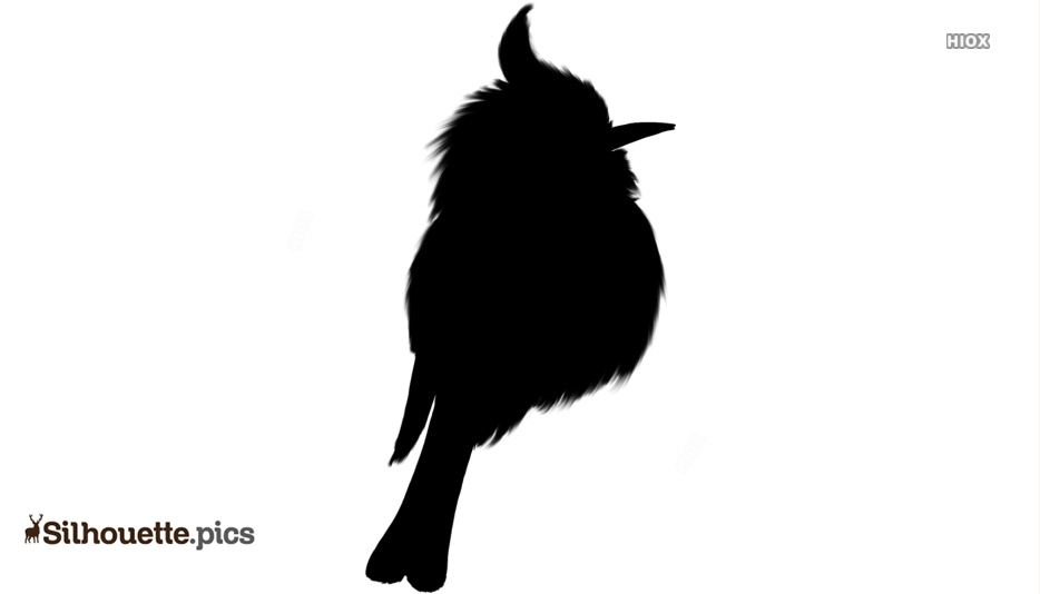 Black And White Cute Bird Silhouette