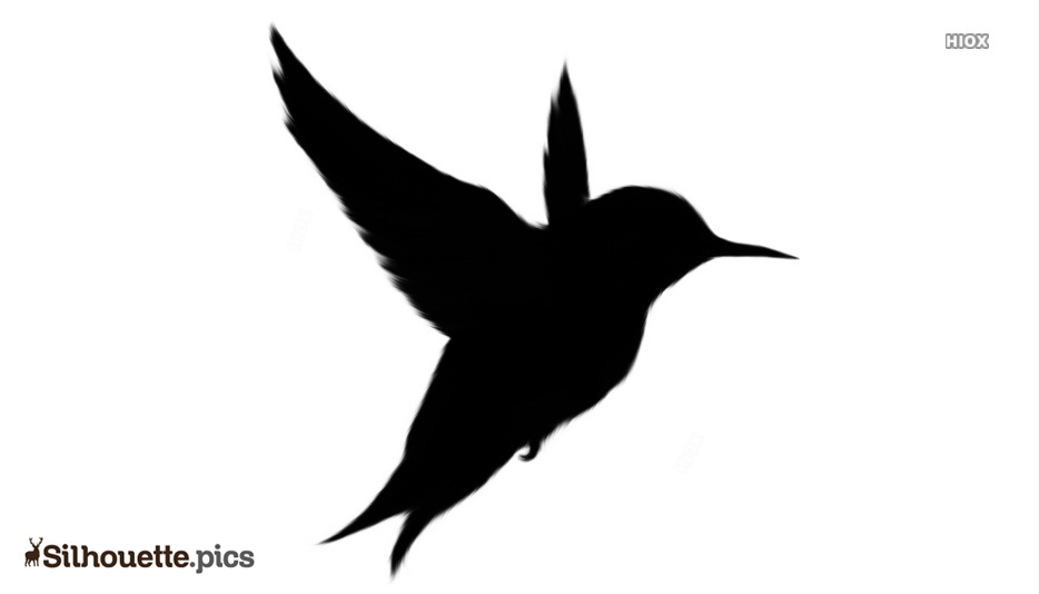 Black And White Flying Bird Silhouette Vector