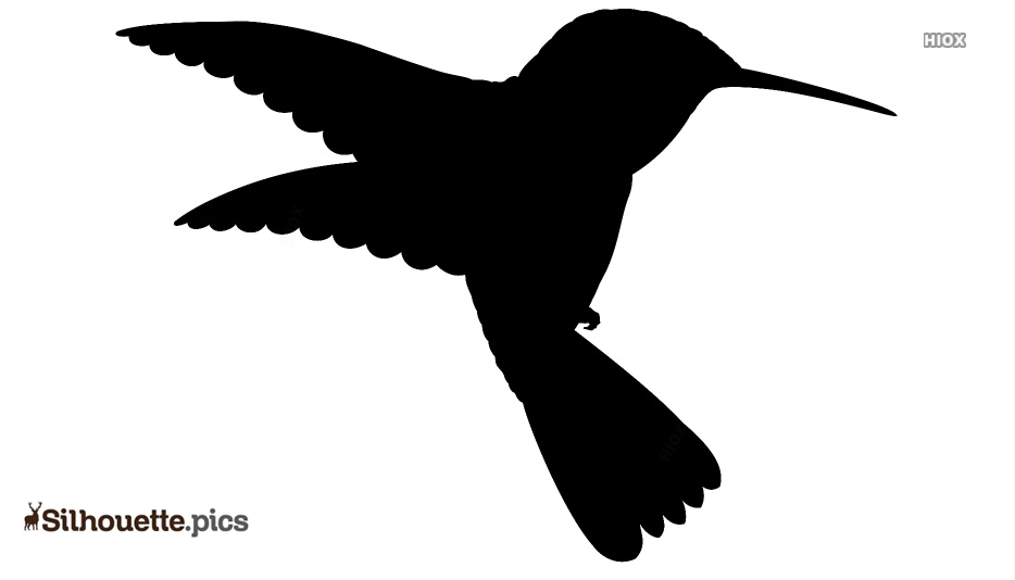 Black And White Hummingbird Wallpaper Silhouette