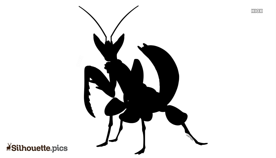 Black And White Orchid Mantis Silhouette