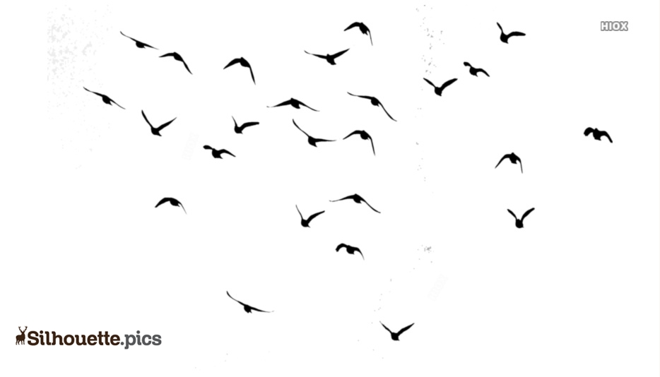 Black Beautiful Flying Birds Silhouette Image