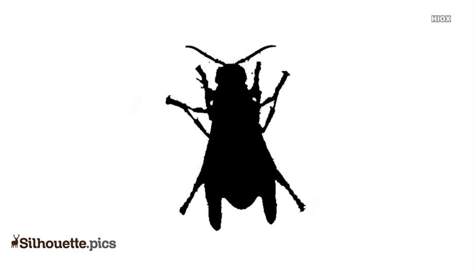 Black Common Pest Silhouette Image