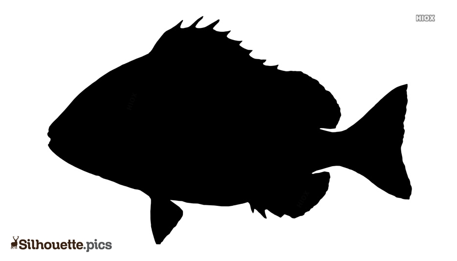 Black Fish Backgrounds Silhouette Image