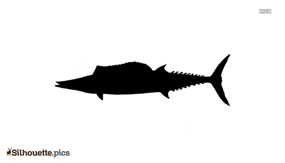 Black Florida Fish Silhouette Image