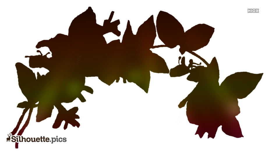Black Honeysuckle Flower Silhouette Image