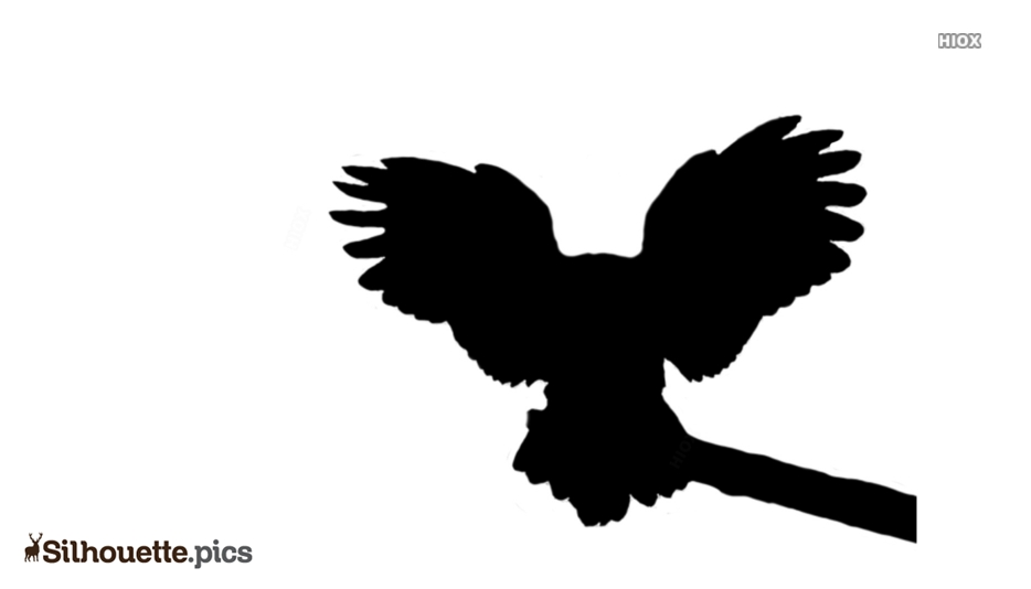 Black Owl Flying Silhouette Image