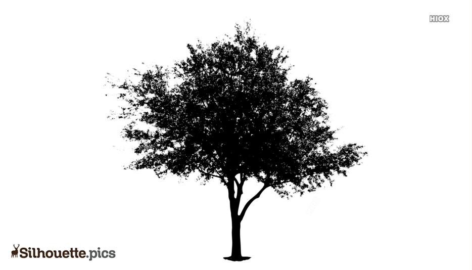 Black Tree Texture Silhouette Image
