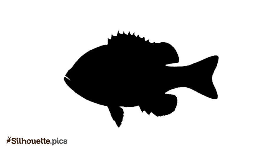 Bluegill Fish Silhouette Art