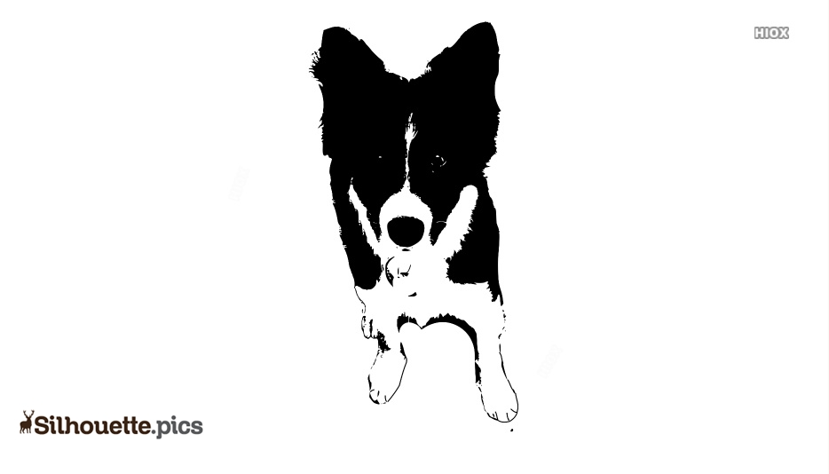 Border Collie Dog Clipart