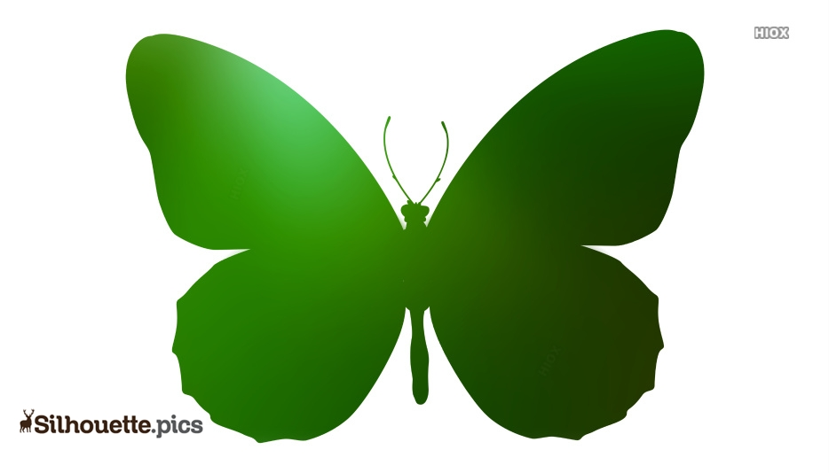 Butterfly Drawings Vector Silhouette Images, Pictures