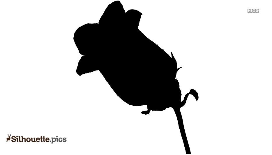 Campanula Flower Clipart | Bellflower Silhouette