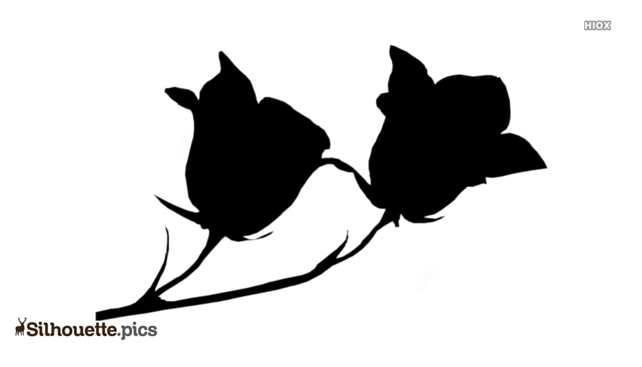Campanula Flower Silhouette Background