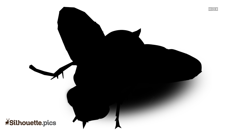 Cartoon Fly Silhouette Pictures