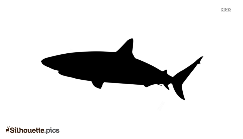 Cartoon Shark Drawing Silhouette Vector Graphics