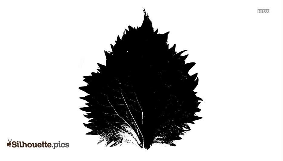Cartoon Shiso Leaves Silhouette