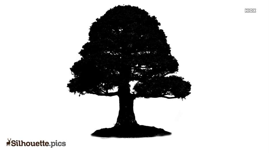 Cartoon Tree Silhouette Vector And Graphics