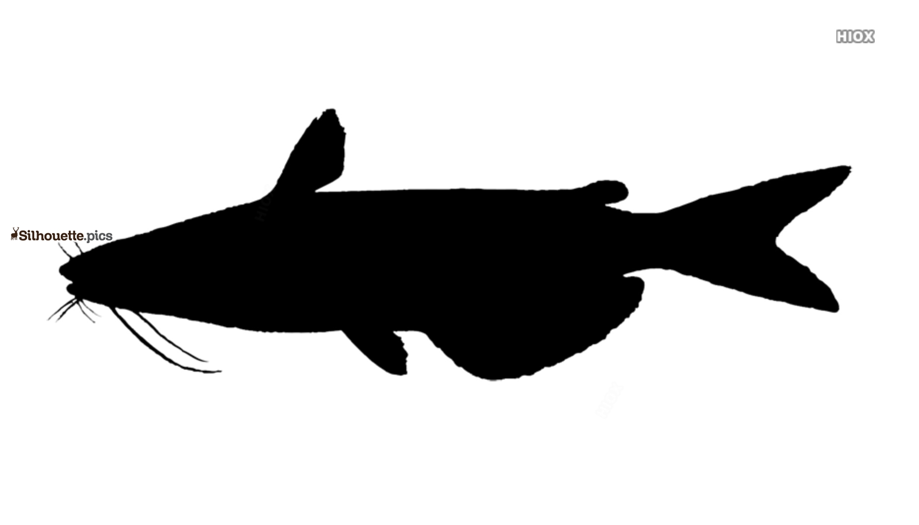 Catfish Drawings Silhouette