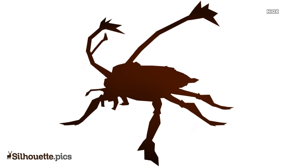 Cockroach Silhouette Images