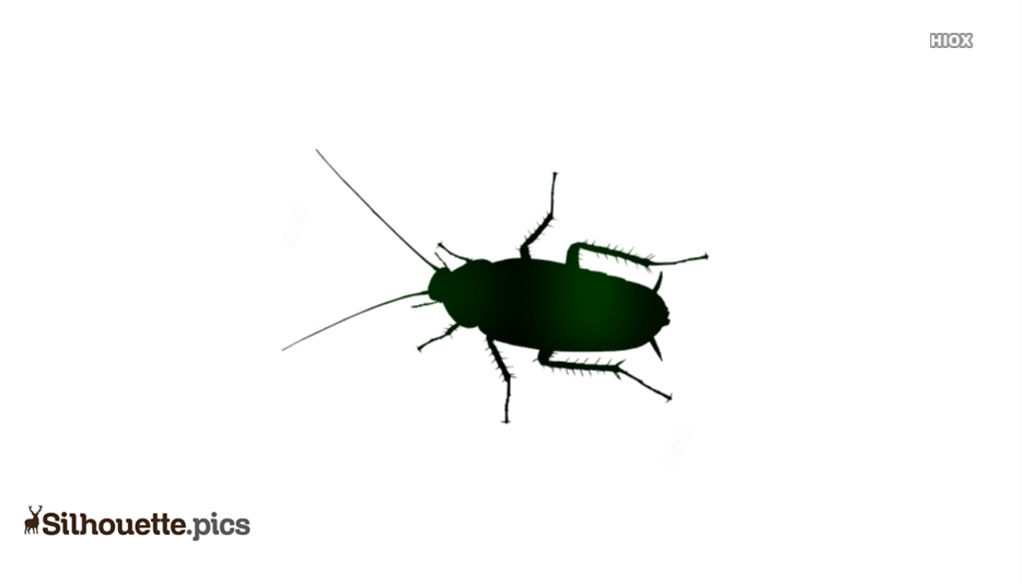 Cockroach Silhouette Png