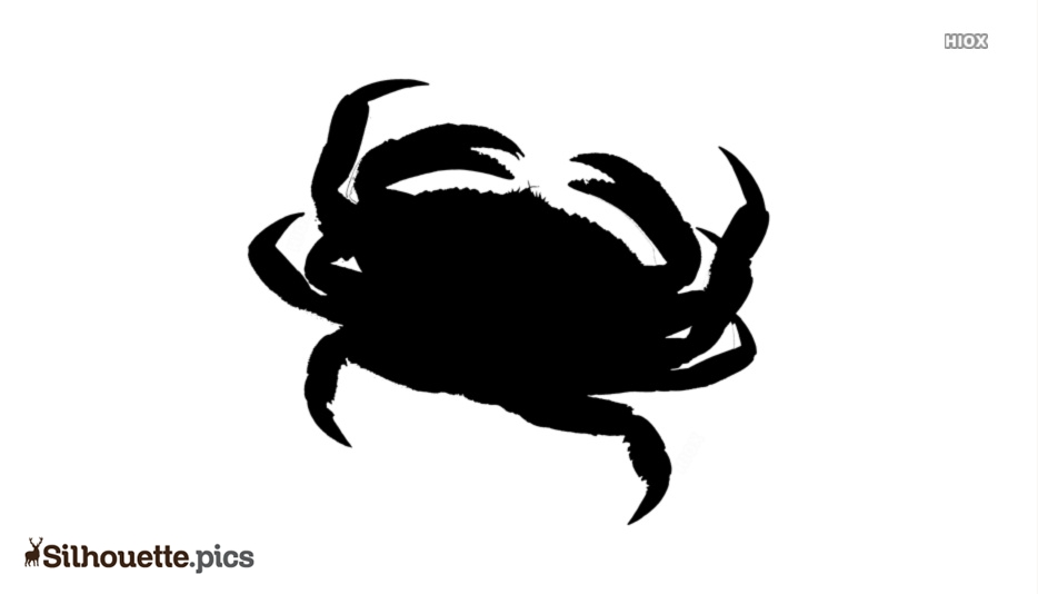 Coconut Crab Silhouette Drawing