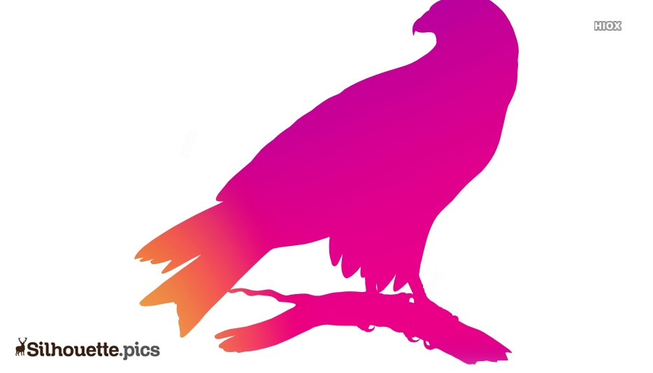 Colorful Falcon Bird Silhouette Image