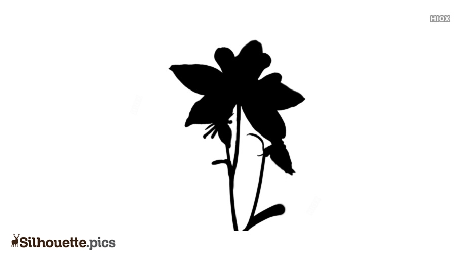 Columbine Flower Silhouette Drawing