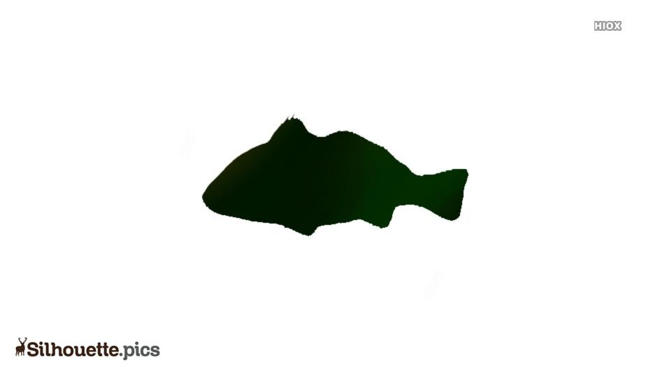 Croaker Fish Silhouette Illustration