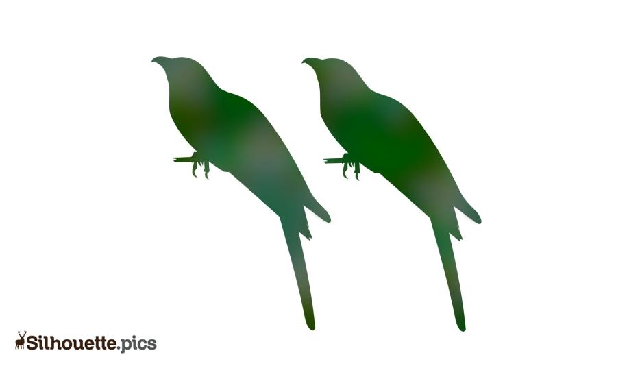 Cuckoo Bird Drawing Silhouette Illustration