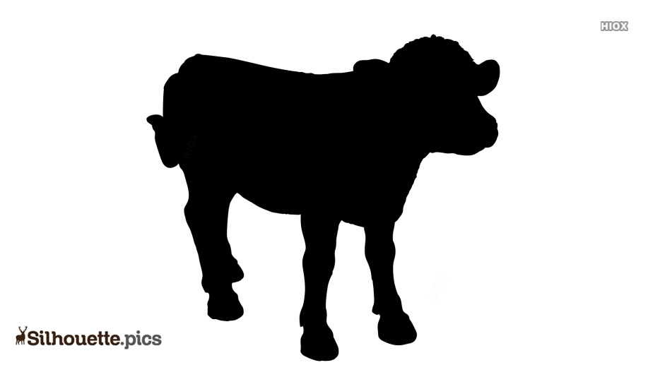 Calf Silhouette Images