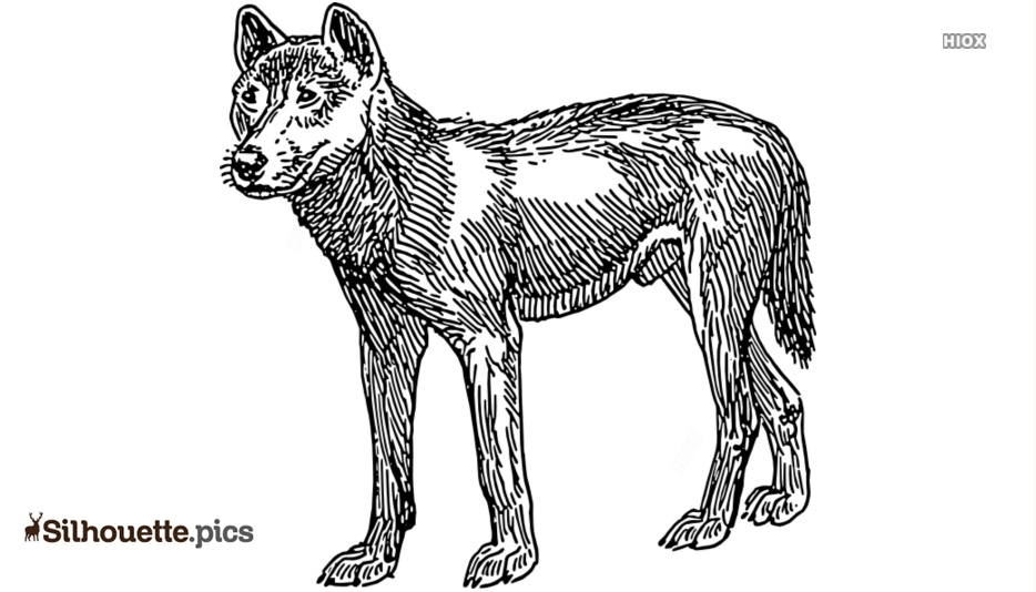 Dingo Dog Silhouette