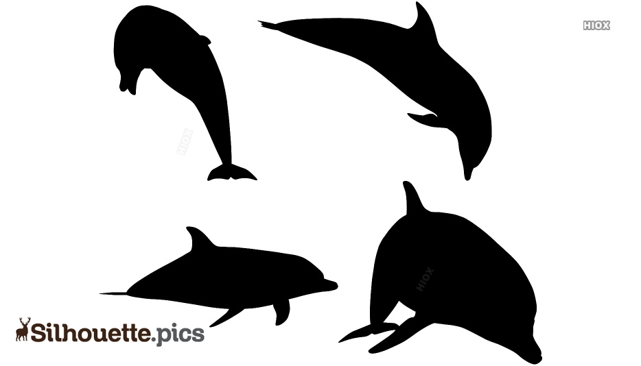 Dolphins Silhouette