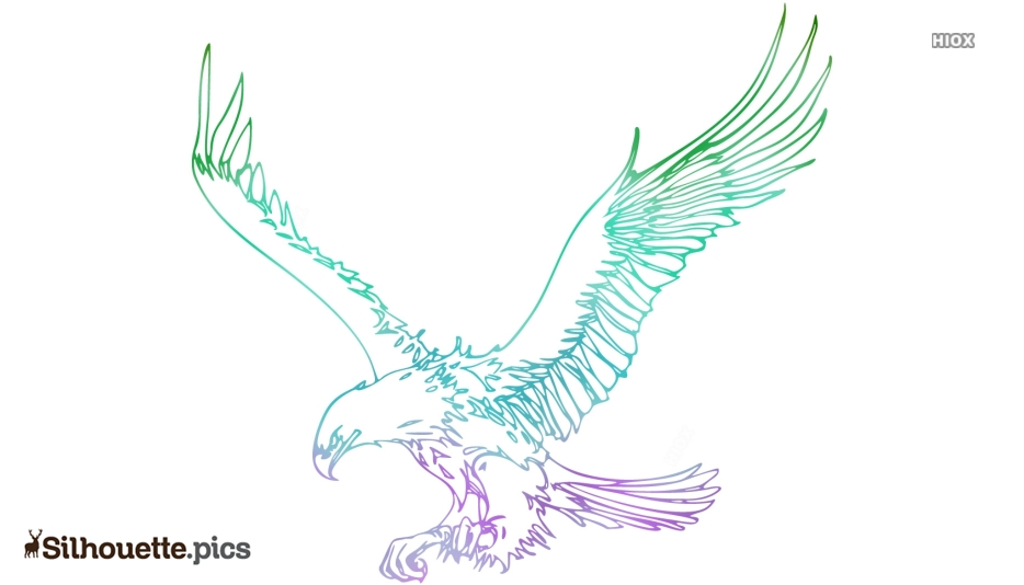 Eagle Drawings Silhouette Image And Vector