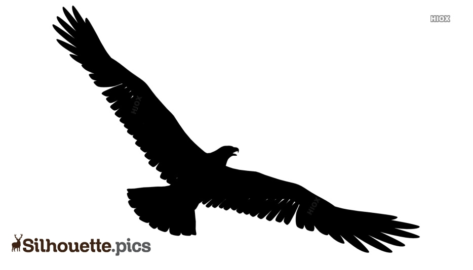 Eagle Spreading Wings Silhouette Picture