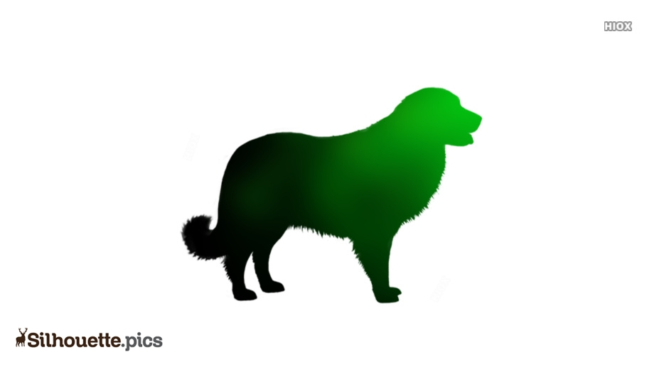 Dog Breeds Silhouette Images, Pics