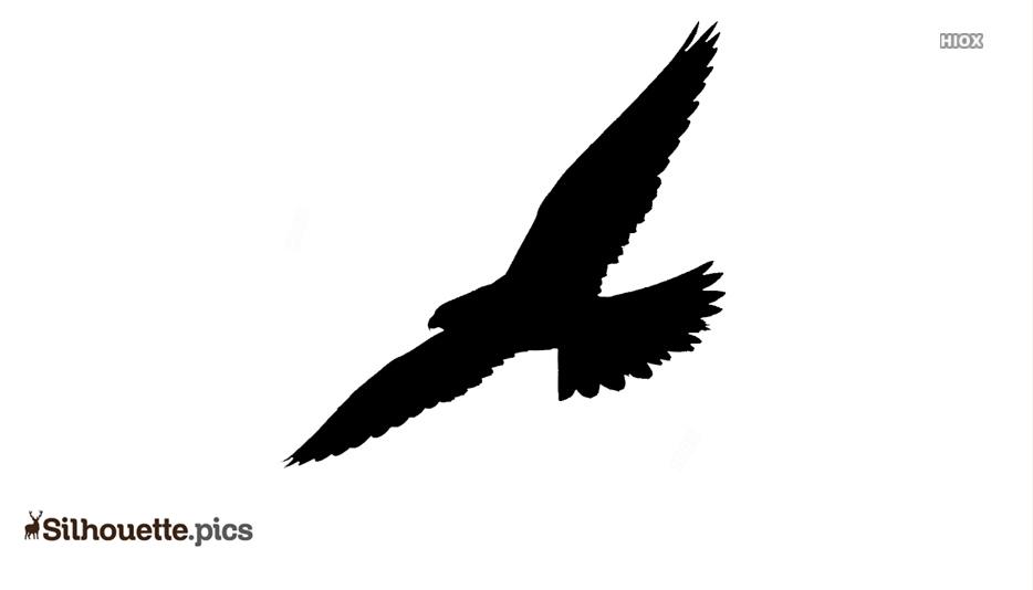 Falcon Bird Flying Silhouette