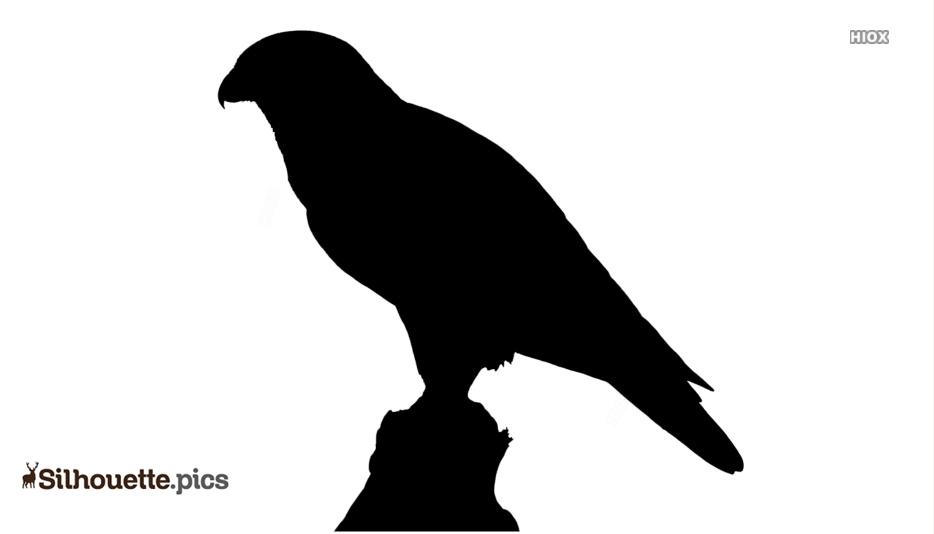 Falcon Bird Silhouette