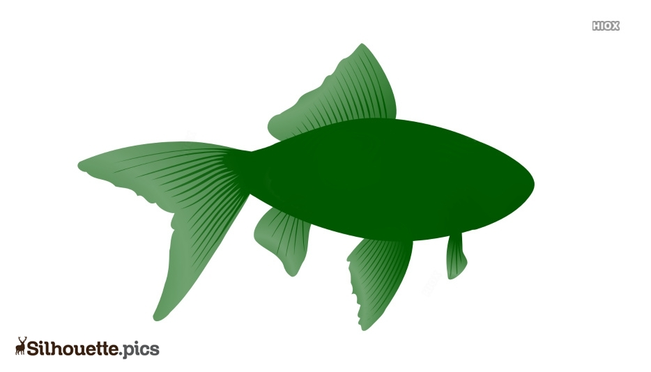 Fish Graphic Silhouette Background