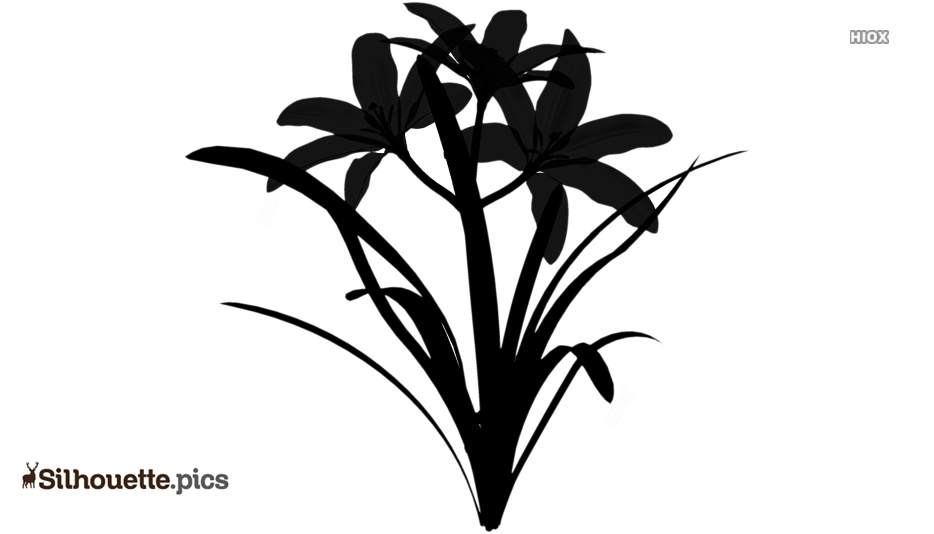 Flowers Silhouette Drawing