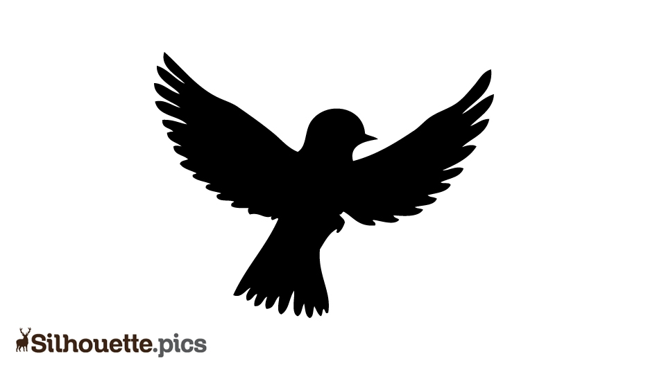 Flying Bird Silhouette Images, Pictures