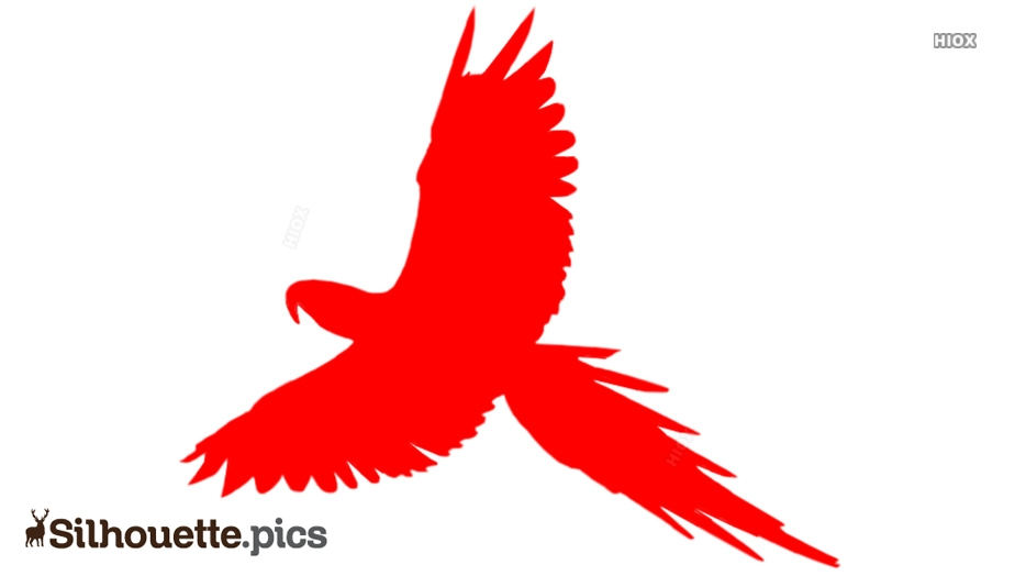 Flying Parrot Silhouette Image